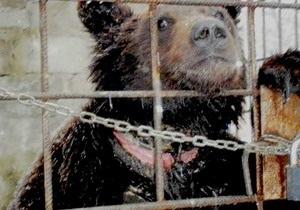 В Луганске хозяин медведя Потапа напал на журналистов