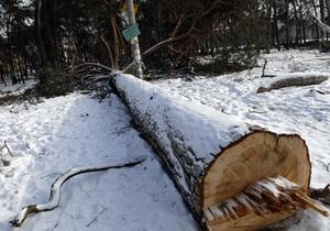Прокуратура возбудила дело по факту вырубки деревьев в урочище Покал в Киеве