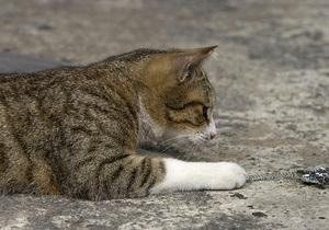 В Черкассах бешеный кот покусал ребенка и троих взрослых