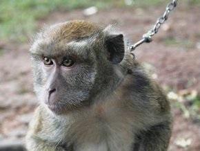Химикатный гель уберег обезьян от ВИЧ