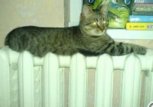 новости Киева - тепло - отопление - авария - В Киеве ликвидирована авария на ТЭЦ-6, из-за которой без тепла остались  Оболонь, Троещина и Лесная