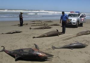 Ученые установили причины массовой гибели дельфинов в Перу