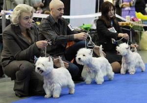 В Киеве пройдет международная выставка собак
