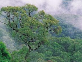 Климатологи: К концу века может исчезнуть 85% тропических лесов