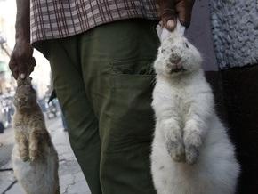 В Новой Зеландии детям запретили бросаться мертвыми кроликами