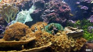 Кораллы двигаются, чтобы не быть погребенными под песком