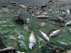 В Черкасской области массово гибнет рыба
