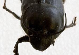 Ученые назвали самое сильное в мире насекомое