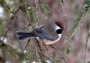 Ученые на примере птиц объяснили, почему люди изменяют своим супругам