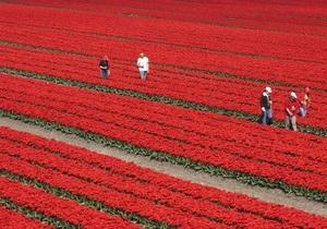 Из-за массовых продаж роз в Европе водные ресурсы Кении истощаются