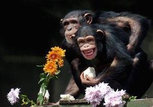 В Киевский зоопарк привезли шимпанзе Джонни