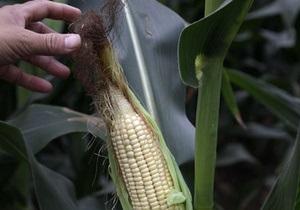 Урожай кукурузы в КНР в текущем сезоне впервые в истории превысит урожай риса