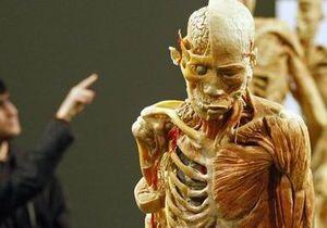 Ученые создали материал с уникальными свойствами мышечных тканей человека