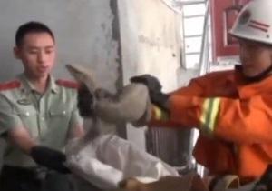 Новости Китая - странные новости: В дом жительницы Китая влезла огромная ящерица