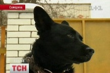 В Украине впервые человек получил тюремный срок за издевательство над животным