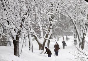 Деревья в Киеве укутают полиэтиленовой пленкой
