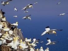 Ученые: Первые птицы на Земле появились 100 млн лет назад