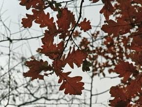Прогноз погоды на пятницу, 27 ноября