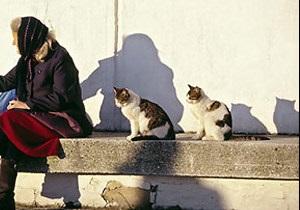 новости Киева - коты - животные - спасение - В Киеве спасены два кота