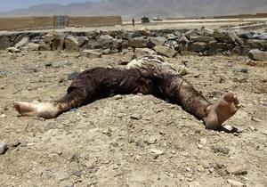 Талибы за год собрали 400 миллионов долларов - ООН