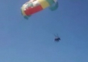 В России могут возбудить уголовное дело против запустивших в полет на парашюте живого осла