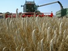 Украина увеличила квоты на экспорт зерна
