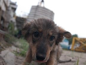Во всех районах Киева появятся площадки для выгула собак