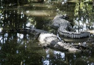 В Китае полиция конфисковала у контрабандистов редких крокодилов