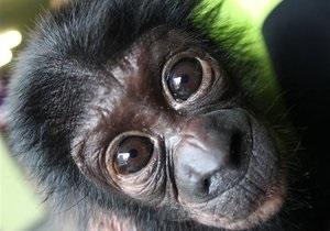 Шимпанзе из испанского зоопарка уличили в пристрастии к порнографии