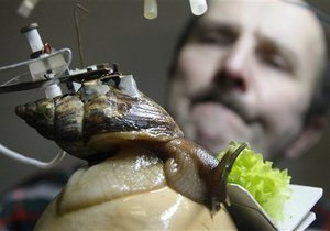 Российские ученые используют гигантских улиток для очищения сточных вод