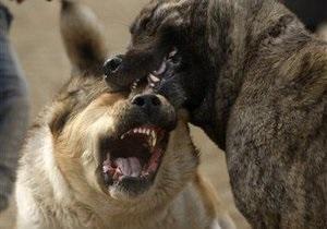 Немецкий суд обвинил женщину в том, что ее укусила собака