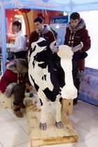 Жители Донецка смогут попробовать пломбир из-под коровы