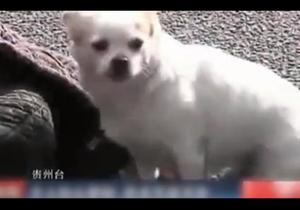 В Китае собака до последнего защищала упавшего в обморок хозяина