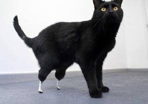 В Британии ветеринары снабдили кота протезами