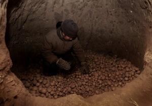 Минэкономики: Дефицита картофеля не будет