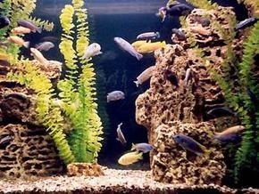 Приобретаем аквариум для квартиры