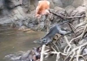 Новости США - странные новости: В одном из зоопарков Нью-Йорка выдры загрызли обезьяну