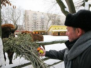 Матрешки Ющенко, Тимошенко и Черновецкого будут продавать в столичном зоопарке