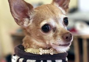 Хозяева нашли пропавшую два года назад собаку в пяти тысячах километров от дома