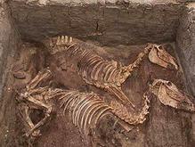 Ученые: Древние египтяне очень почитали ослов