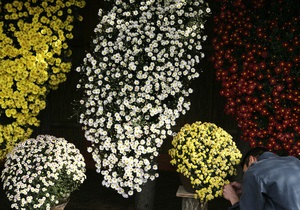 В Киеве на Певческом поле сегодня откроется выставка хризантем