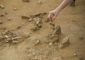 В ЮАР обнаружили останки неизвестного науке вида древней лисы