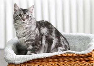 Банк выдал россиянке кредит на покупку котенка