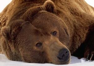 В Швейцарии застрелили единственного в стране медведя