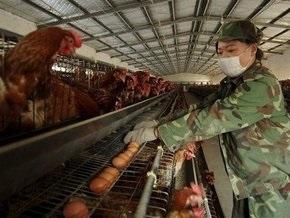 18-летний китаец стал очередной жертвой птичьего гриппа в стране