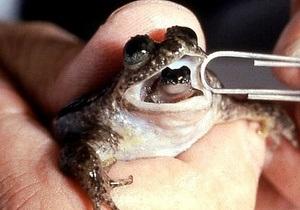 Новости науки - клонирование животных: В Австралии решили  воскресить  лягушек, которые рожали через рот