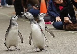 Ученые: Гомосексуальные союзы среди пингвинов недолговечны
