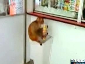 В центре Москвы завелись голодные обезьяны