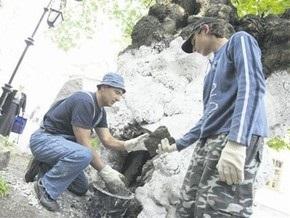 На территории Лавры реставрировали 800-летнюю липу