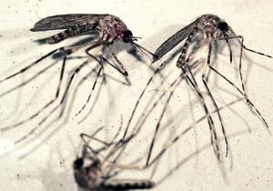 Биологи открыли способность малярии наводить комаров на людей